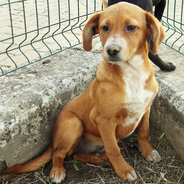 animal-n--648/2017---cachorrinha-2-a-3-meses-para-adocao-responsavel