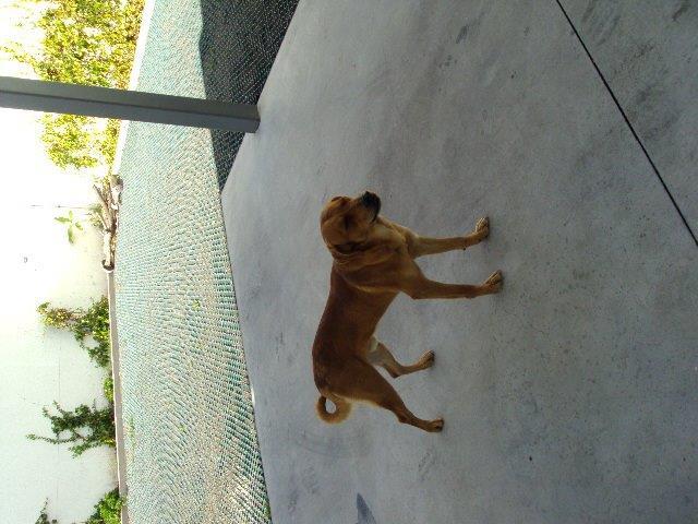 Para adopção - Cachorro porte médio
