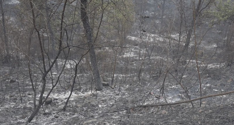 Apoio financeiro para agricultores Macedenses afetados pelos incêndios florestais de julho e agosto