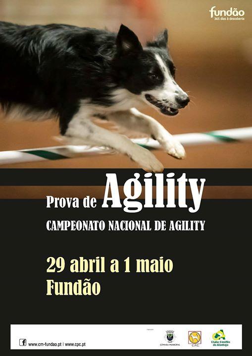 prova-de-agility---campeonato-nacional-de-agility